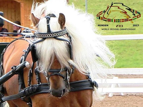 FEI World Driving Chamionships for Ponies